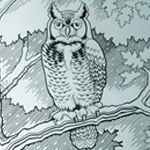 Architectural Etched Glass Owl